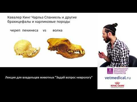 Субботин А. С. - Задай вопрос неврологу (Лекция для владельцев животных )