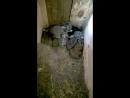 Кроликам 15 дней