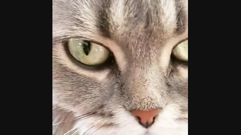 Котиков Вам в ленту, ну и лучших скоб для крепления труб монтажными пистолетами! =)