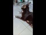 Кот, это точно мука была?!
