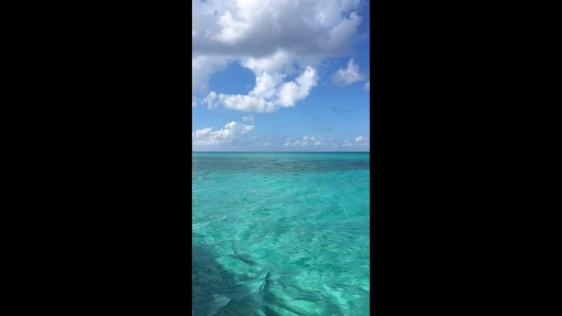 Доминикано карибское море