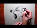 How to Draw a Wolf Pencil drawing Jasmina Susak Speed drawing of a wolf
