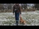 "Дрессировка собаки Норматив BH — BEGLEITHUND ""Собака-компаньон"""