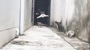 Run Cats in Alley Viral Video.