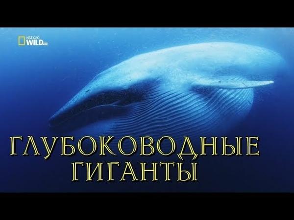 Nat Geo Wild: Глубоководные гиганты (1080р)