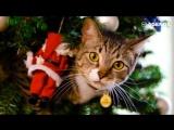 Котики против елок
