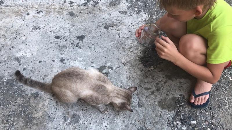 Лешик и его абхазкий кот