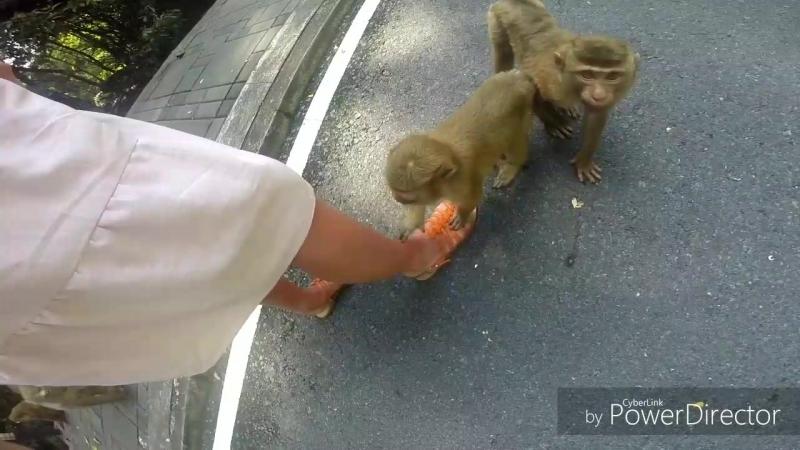 Тайланд- Пхукет- гора обезьян