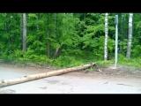 Под Йошкар-Олой от порыва ветра на автомобильную дорогу упало дерево