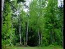 Живой лес!