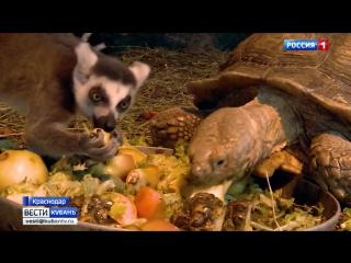 Обитатели краснодарского «Сафари-парка» переехали в закрытые вольеры