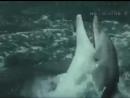 Прощание Ники - Люди и дельфины