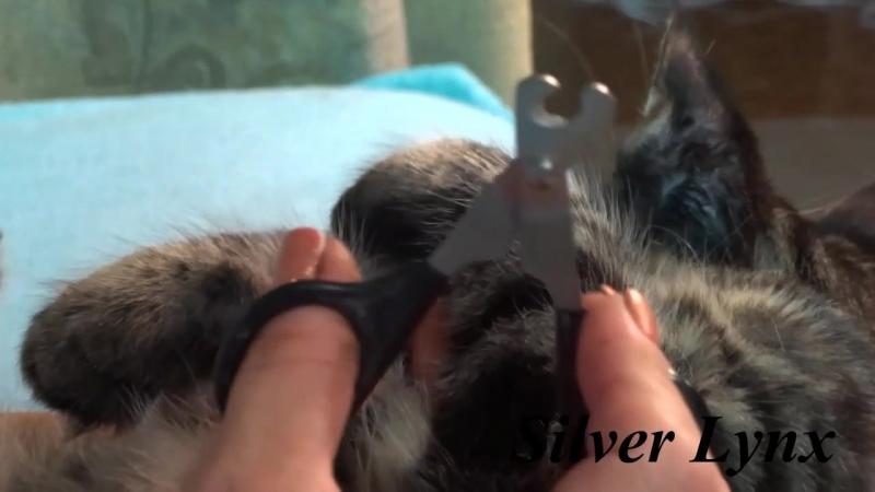 Как постричь котенку когти