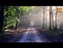 Ein Zugang der dich sofort ins Jetzt bringt (Bewußtseins-Übung) - Eckhart Tolle