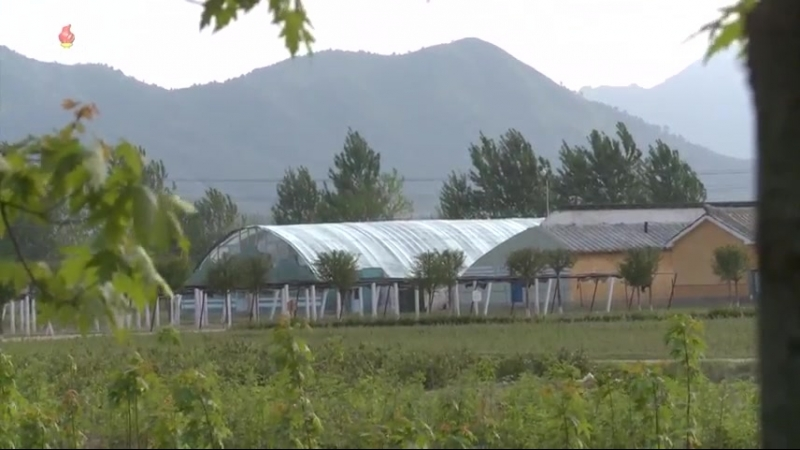 푸른 숲의 참된 주인들 -송화군산림경영소 후방가족들을 찾아서-