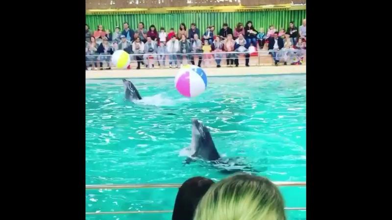 Дельфины набивают мяч не хуже футболистов