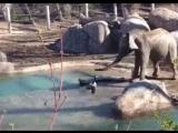 Слон и .... (нет, ни Моська)