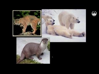 Лекция №14. Класс Млекопитающие Часть №2.Систематическое разнообразие плацентарных млекопитающих. Варианты строения зубной систе