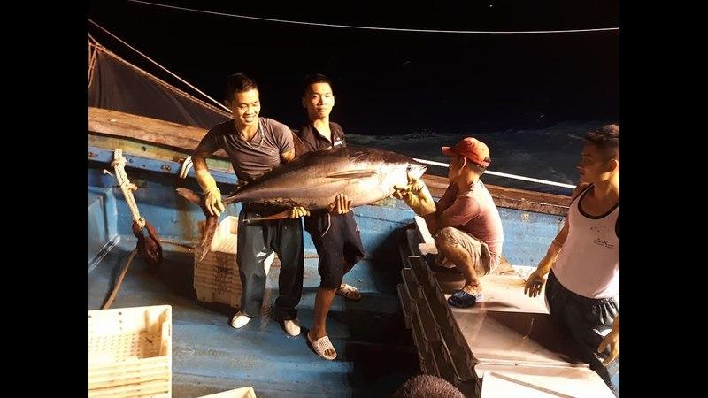Nhật ký đi biển 6-đánh bắt cá được cá ngừ đại dương 70kg