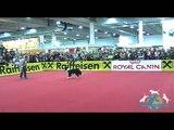 Dogdance Turnier Klasse 2 Lukas &amp Border Collie Falco - Mensch &amp Tier 2012