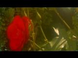 Александр Марцинкевич и группа Кабриолет- РОЗА БЕЛАЯ-Автор ролика-Валентина Песк