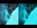 Секс в открытом океане одно видео про