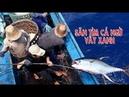 Hành trình câu cá ngừ đại dương Nhật ký đi biên 18