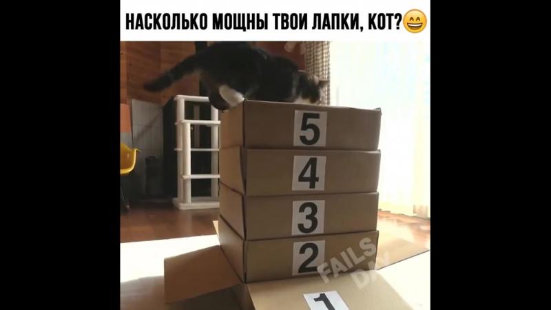 СТАВЬ ЛАЙК - котику который ставит рекорды. Как вы думаете взял бы он высоту или нет? 👇😹