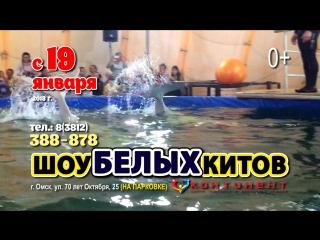 Шоу белых КИТОВ Омск
