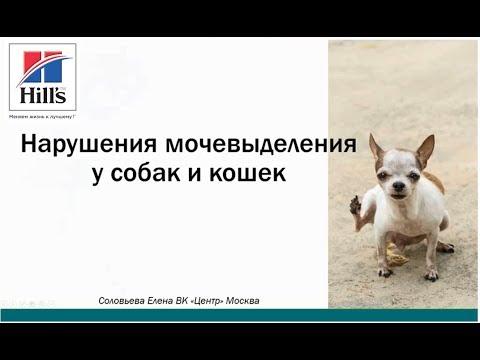 Нарушения мочевыделения у собак и кошек