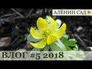 Влог 5 Редис / Подснежники / Крокусы / Топинамбур / Георгины