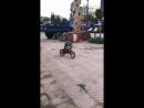 Собака гоняется за обезьяной, едущей на велосипеде