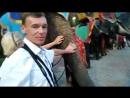 FantaSea шоу слонов