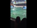 Дельфины и человек🐬🐬🐬
