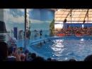 Тайланд дельфины 🐬