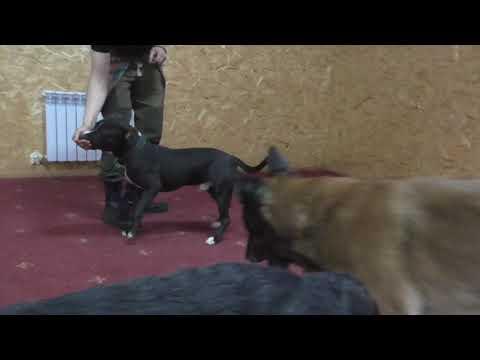 Аксай и собаки