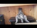 РЖУ НЕ МОГУ! рвут зал, Смех до слез, подборка приколов, смешной ролик, упал, котик, собака, милая, котейка, смеется, ржака, ор,