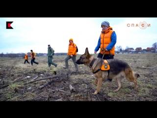Собаки отряда «Лиза Алерт»: немецкие овчарки Грейс и Шейна