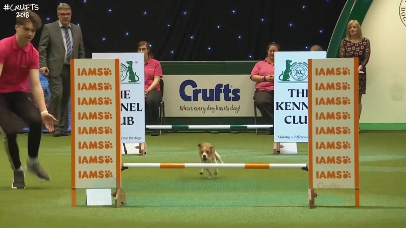 YKC Agility Dog of the Year _ Crufts 2018