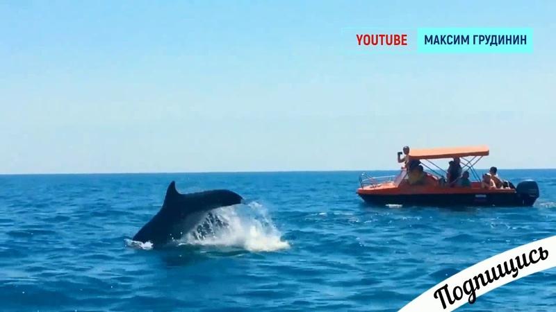 Дельфины в Крыму очень игривые и любят людей