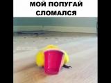 мой попугай сломался