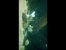 русалки