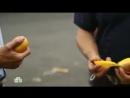 Еда живая и мёртвая Все о гречке суперфрукт манго и 5 способов спасти продук