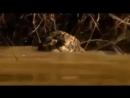 Охота на крокодила.mp4