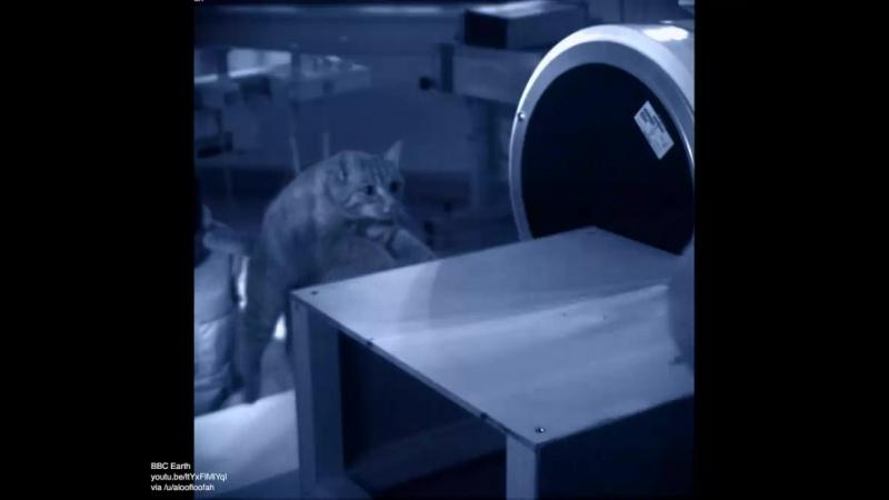 котэ гифки флюороскопия реактор познавательный 4310489