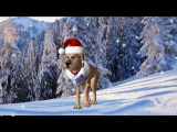 Новогодний футаж для видеомонтажа Встречаем 2018 год собаки