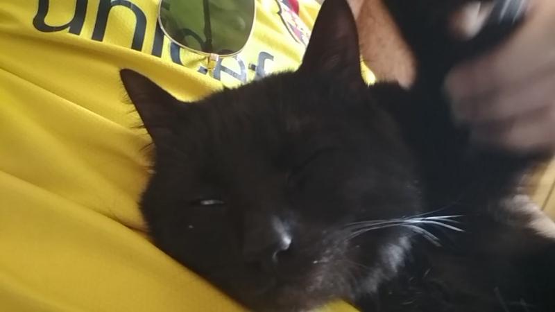 MOZGI - Влажный Пляжный Движ (CAT Support)