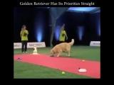 Некоторые собаки более дисциплинированные, чем другие