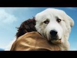 Белль и Себастьян 2. Приключение продолжается – Русский трейлер