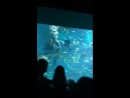 танец с морской черепахой